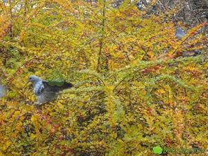 Ptaki w ogrodzie – jakie rośliny zwabią je zimą
