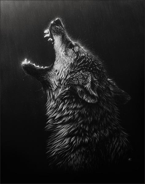 черно-белое фото волка