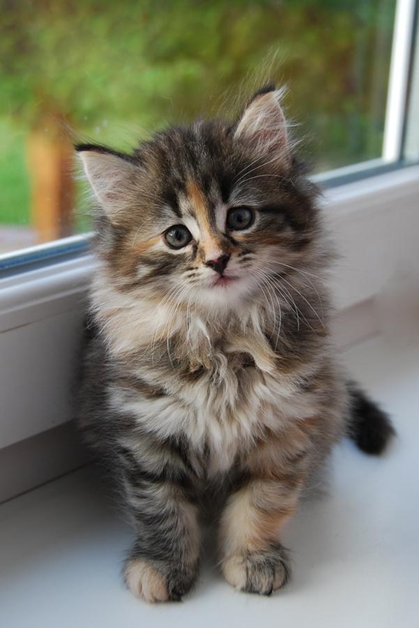 Koleksi Kucing Comel Viral Cinta