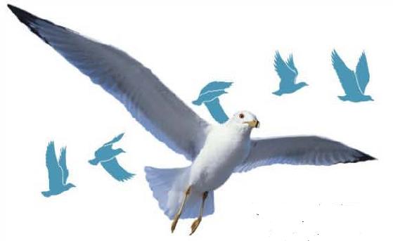 Sayap seekor burung memiliki bentuk yang efisien secara aerodinamis.