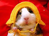 #4 Hamster Wallpaper