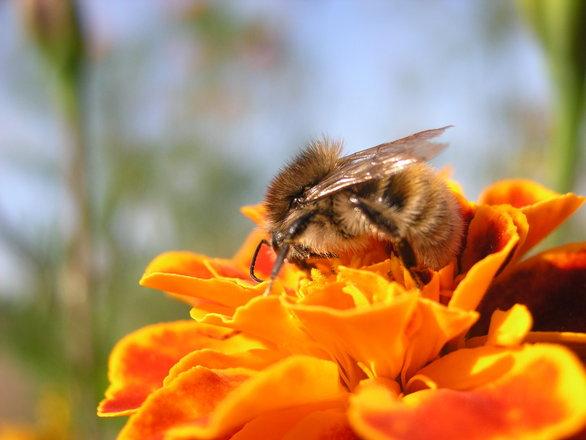 Jardiner a ecol gica ayudando a las abejas for Jardineria ecologica