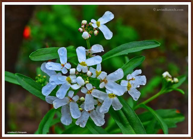 White flower, strange design, yellow, flower, rain, wet,