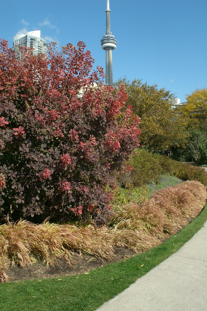 Toronto Music Garden gigue section in the fall by Paul Jung Toronto organic ecological gardening services