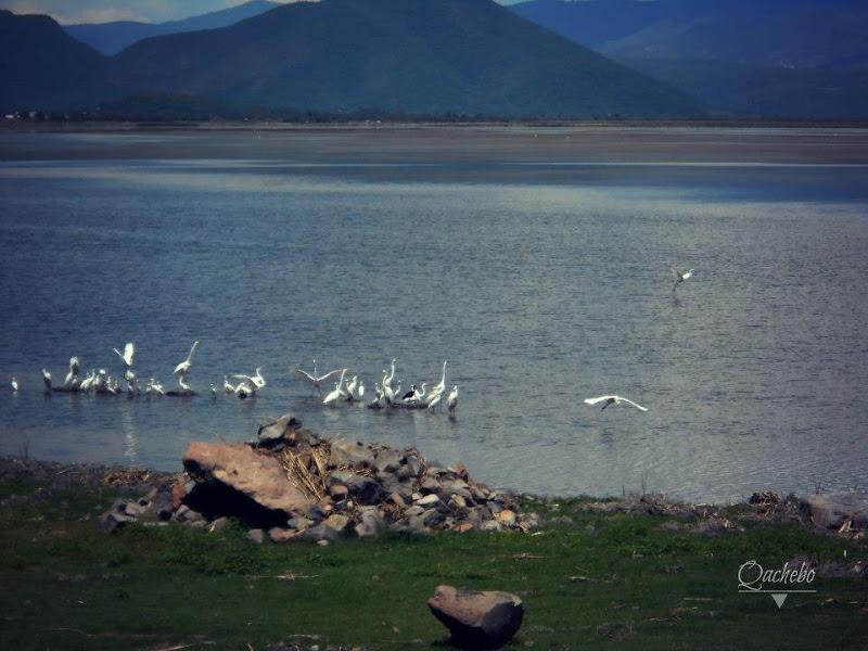 Aves en la laguna de Cuitzeo Iramuco Guanajuato