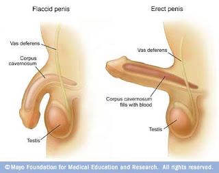 cobra,cobra oil,obat pembesar penis,oil pembesar penis,minyak pembesar penis,cara memperbesar penis,obat herbal pembesar penis,