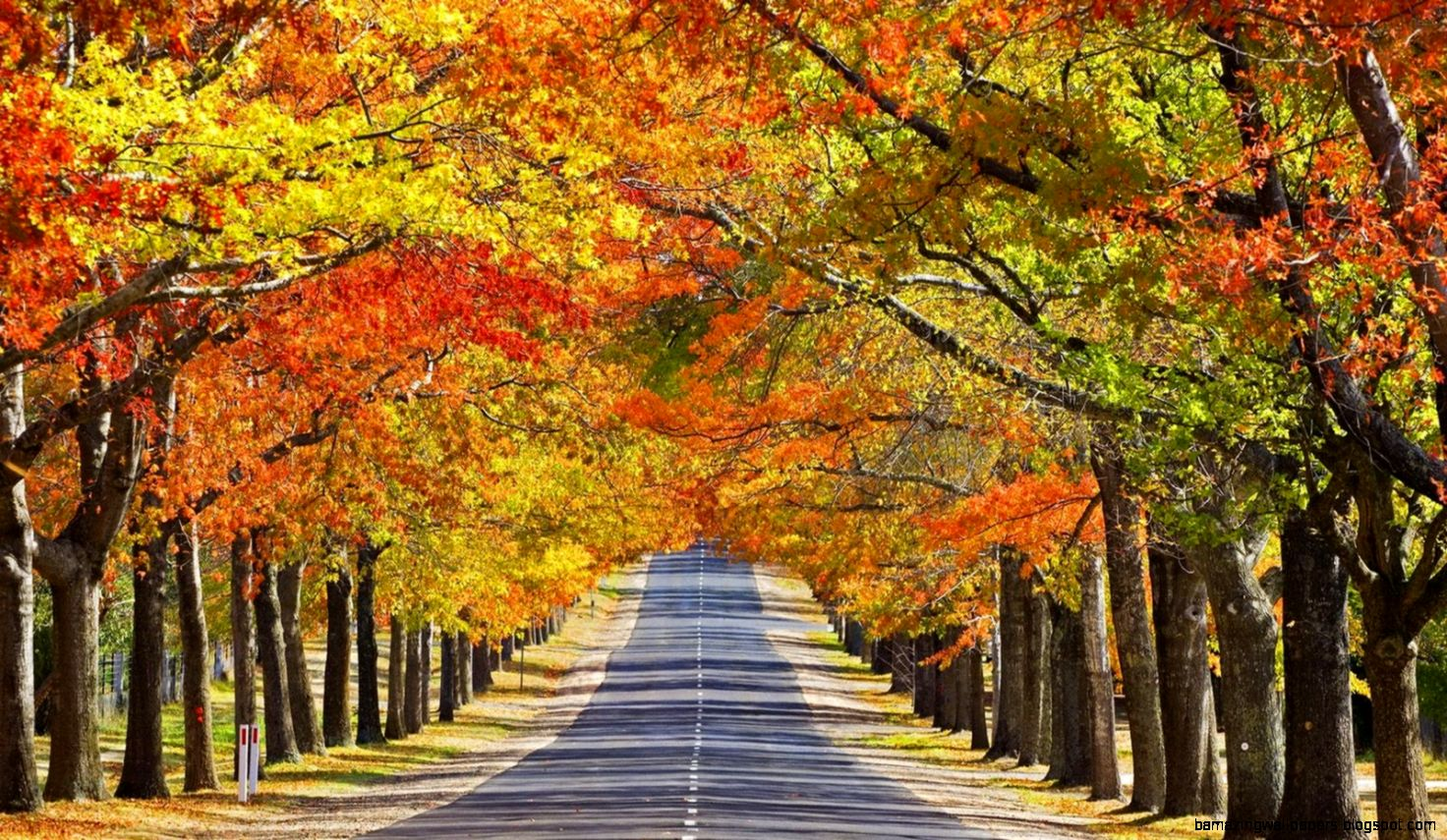 Autumn Nature Wallpaper Desktop   wallpaper