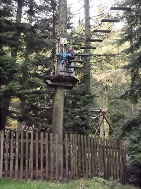 Go Ape Whinlatter bridge