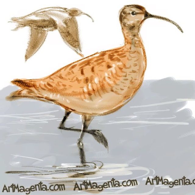 Whimbrel sketch painting. Bird art drawing by illustrator Artmagenta.