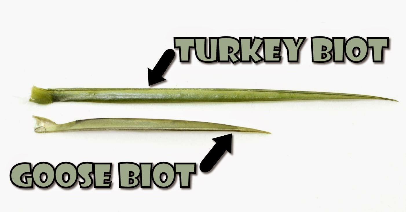 goose and turkey biot comparison