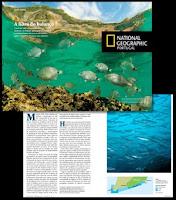 Parque Marinho Luiz Saldanha :: National Geographic - Portugal
