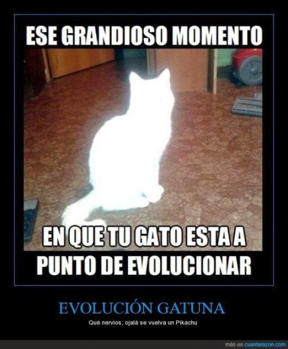 Evolución gatuna