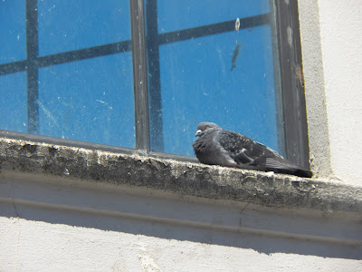A pigeon on a dirty windowsill