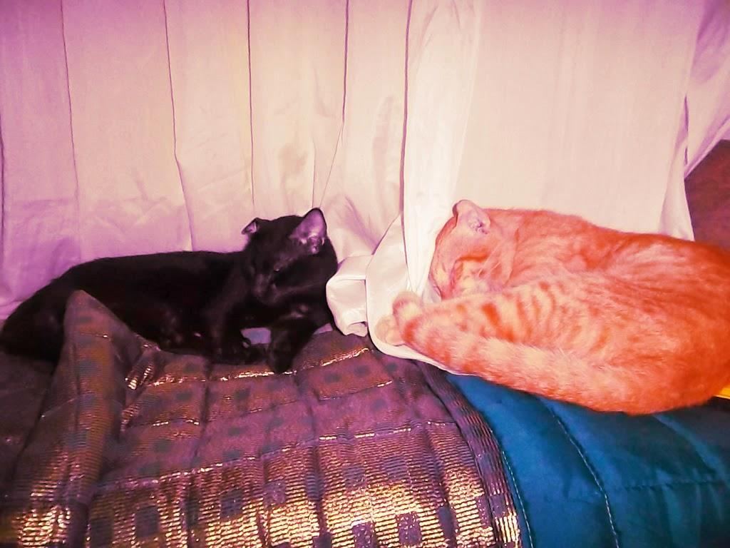 Shadow and Garfield