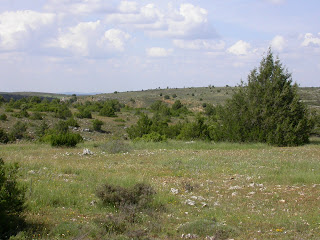 "In the mediterranean belt Cetraria aculeata can also be found in steppe ecosystems such as this ""sabinar"" in Central Spain. Guadalajara, Zaorejas. Credit: Christian Printzen"