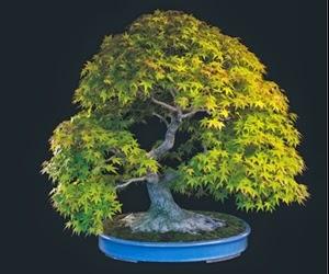 """<img src=""""bonsai20.jpg"""" alt=""""foto bonsai"""">"""