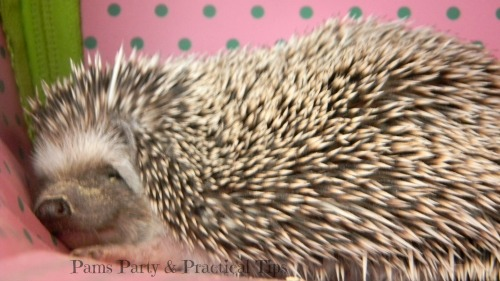 Hedgehog at Woodland Party