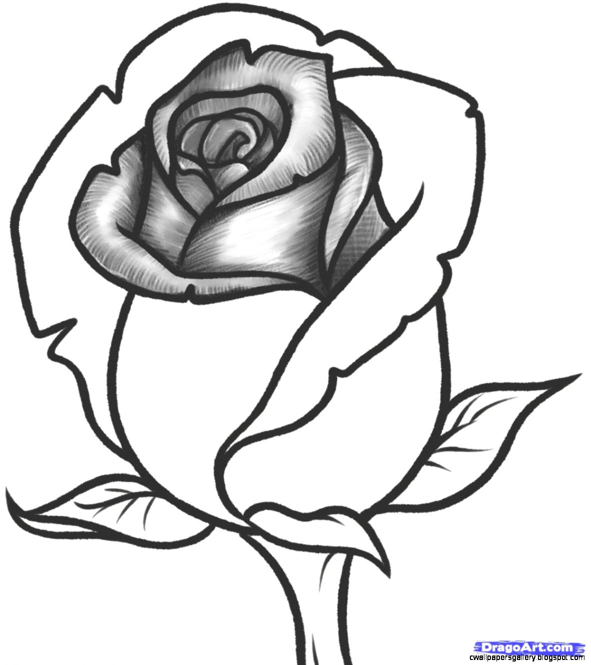 Easy pictures of roses to draw wallpapers gallery for Easy to draw roses for beginners