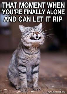 funny cat memes that moment