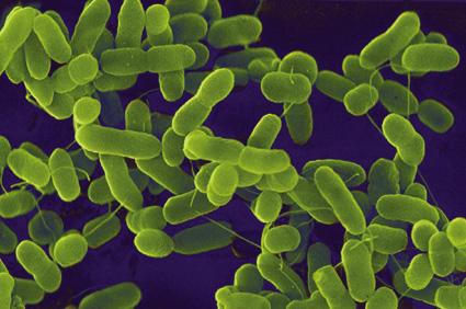 Apakah E. coli itu??