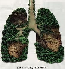 Paru-paru dunia