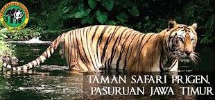 Safari Prigen