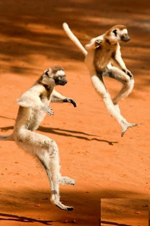 gaya kungfu hewan