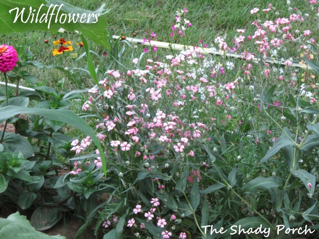 Wildflowers from The Shady Porch #garden #flowers #gardening