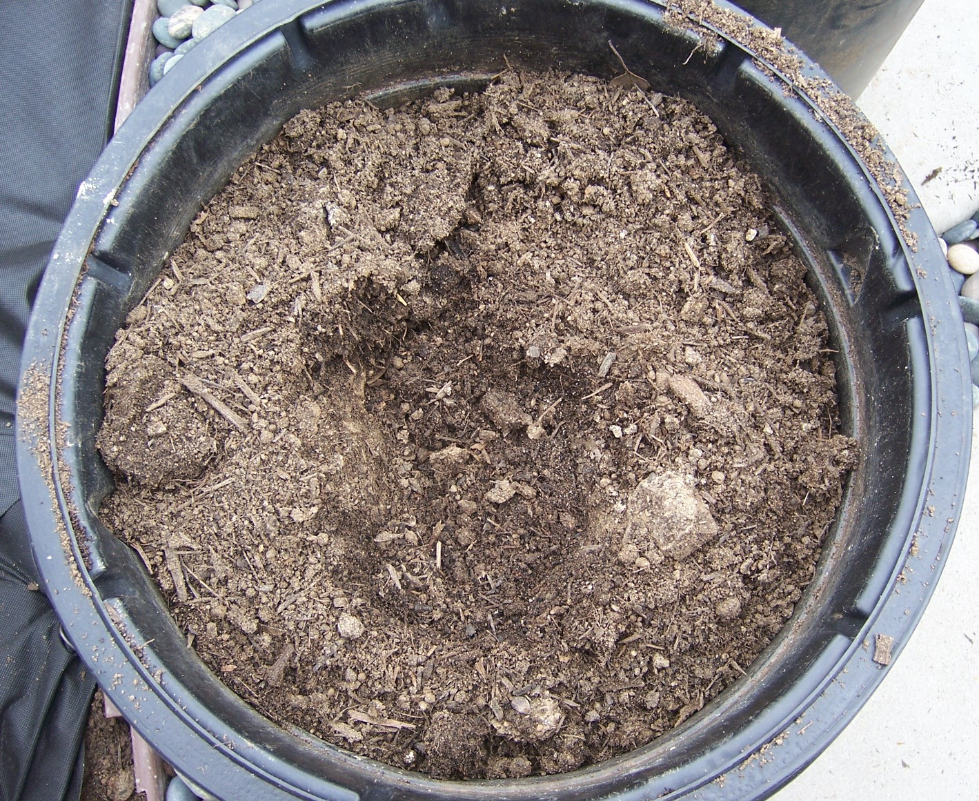The 2 minute gardener photo good soil vs clay soil for Topsoil vs potting soil