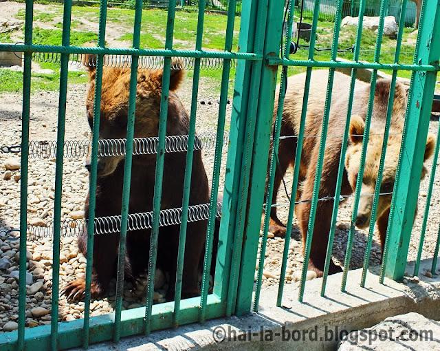 ursi zoo pitesti
