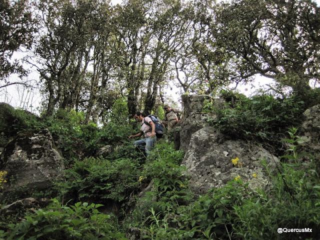 Bajando por la cara sureste del Cerro Viejo
