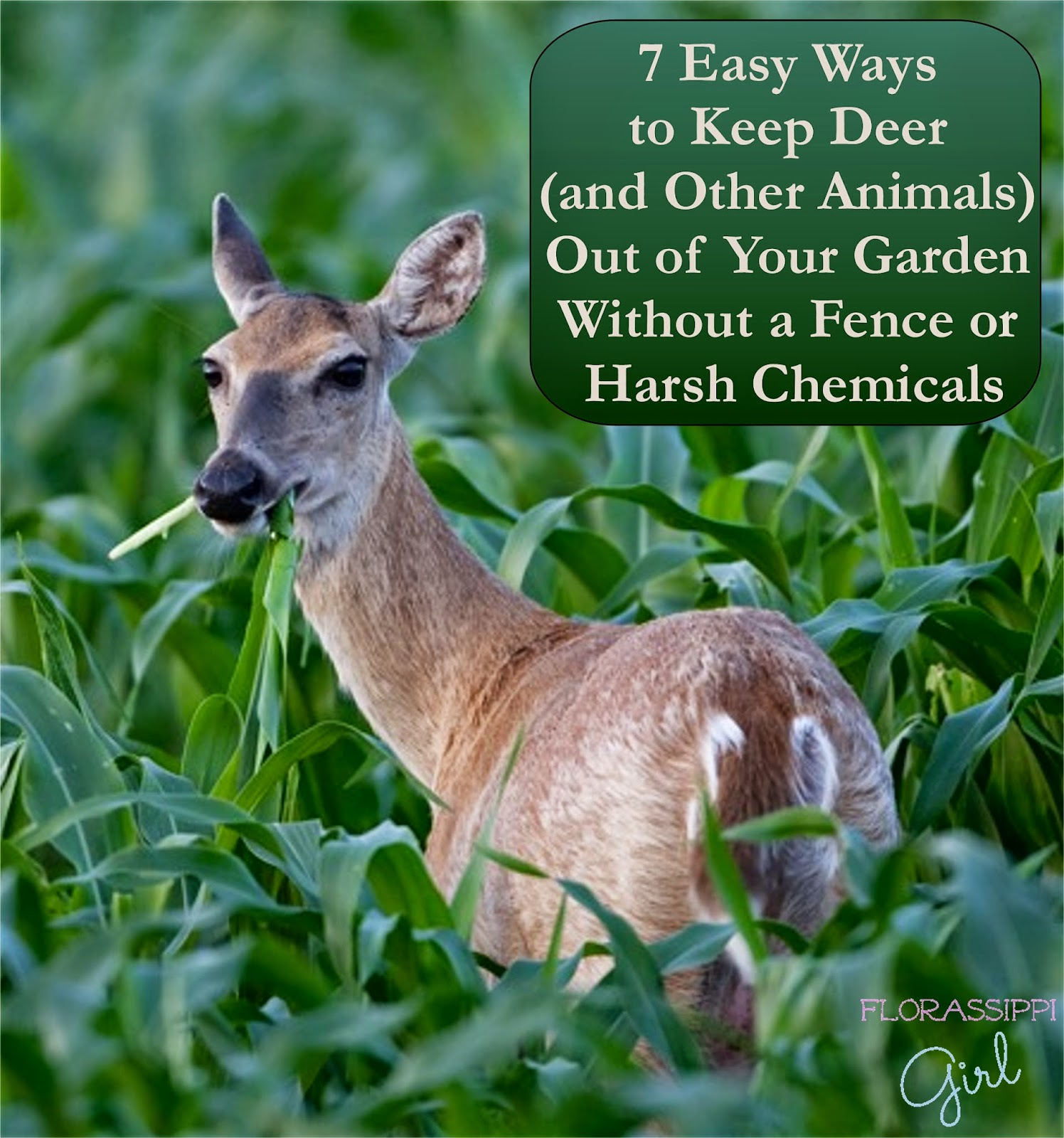 florassippi girl 7 easy ways to keep deer and other animals out of your garden without a