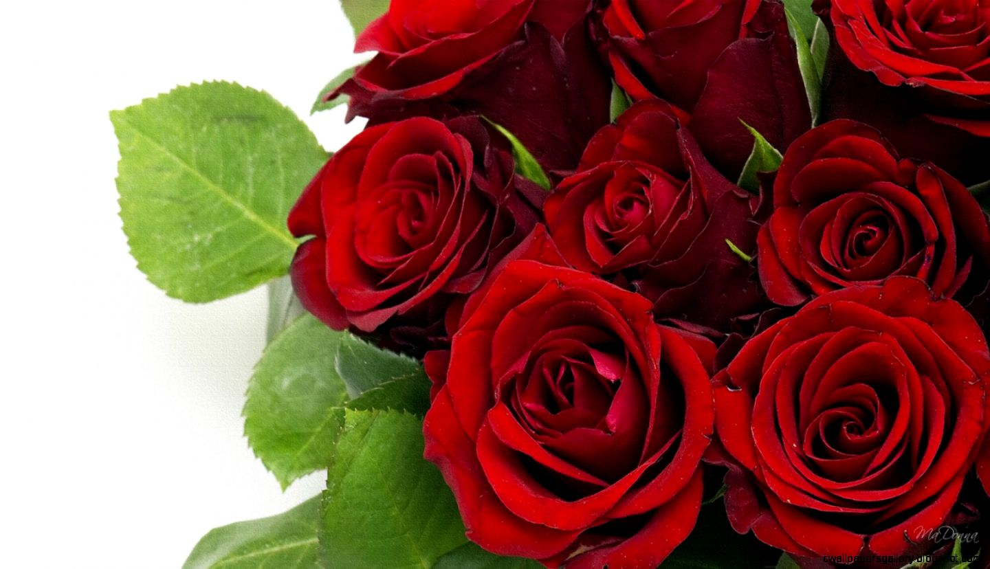 red roses most popular rose rose wallpapers beautiful rose red