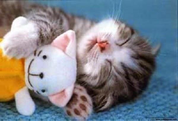 Photo bébé chat qui dort en paix