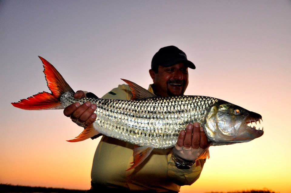 Tiger Fish - Africa