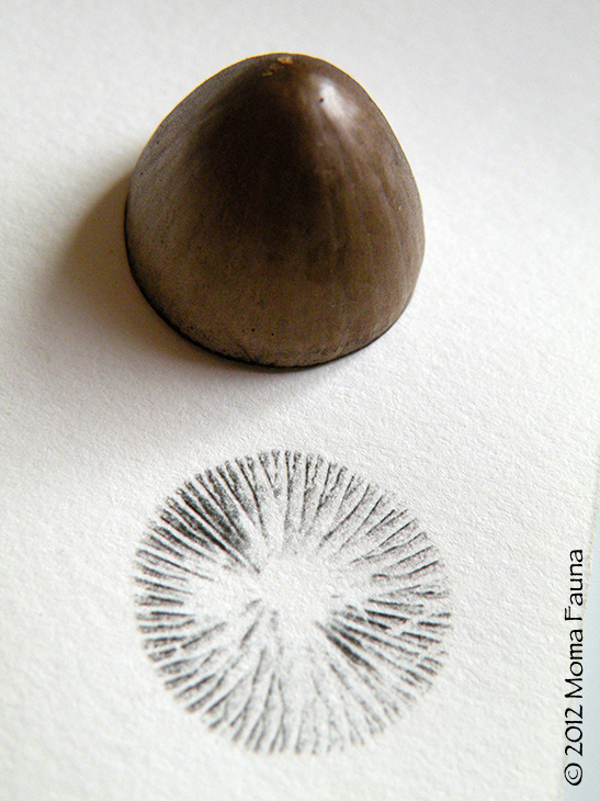 Spore prints --  one way of getting to know fungi.