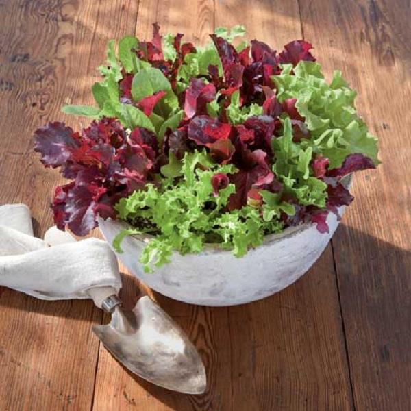 Como plantar lechuga en maceta casa dise o - Plantar en maceta ...