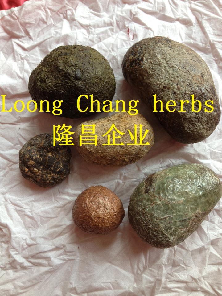 hao zhu zao 豪猪枣 棐 棒 棓 棔 棕 枨 枣 棘 棙 棚 棛 棜 棝 棞 dòng táng gāng.