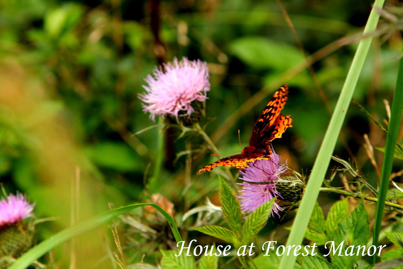 Wild Thistle Flowers
