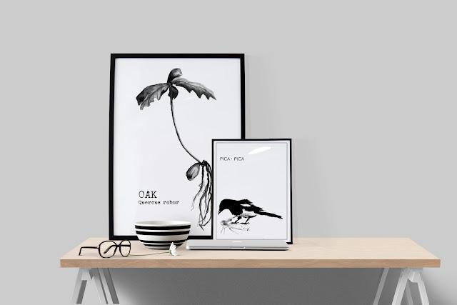 tavlor, konsttryck, webbutik, webbutiker, webshop, svartvitt, svartvita posters, svartvit, svart och vitt, inredning, anneliesdesign, annelies design & interior, skata, oak, ekollon, på väggen,