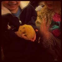 Nursery hamster