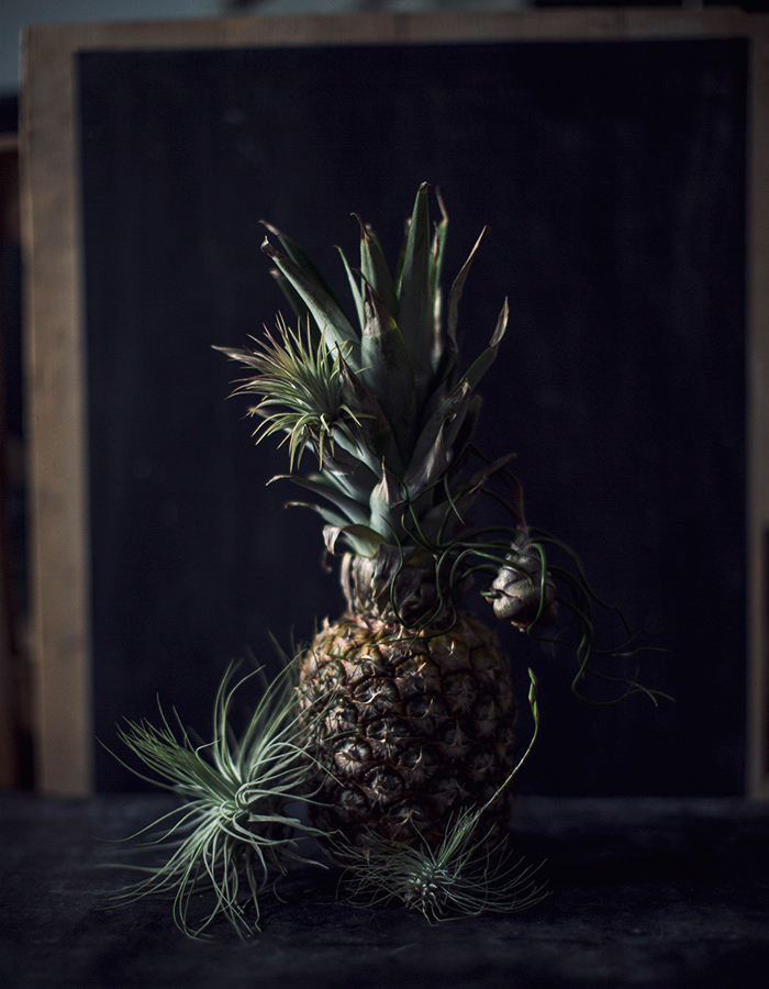 pineapple and tillandsias photo by Kreetta Järvenpää blog: www.gretchengretchen.com