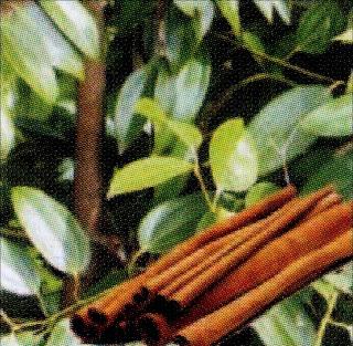 tradisional sehat khasiat kayu manis untuk berbagai penyakit