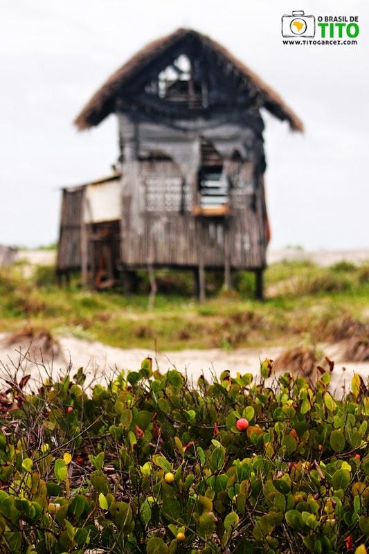 Cabana de madeira e vegetação litorânea na praia da Princesa, na Ilha de Maiandeua (Algodoal), no Pará