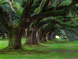 Cinco homens e cinco árvores