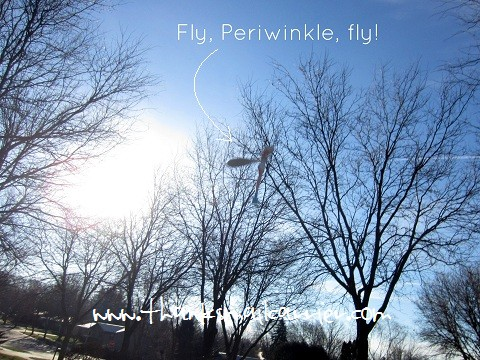 flying Periwinkle toy