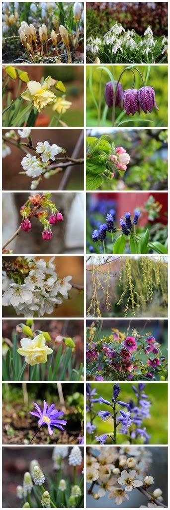 Forårsblomster, biblomster