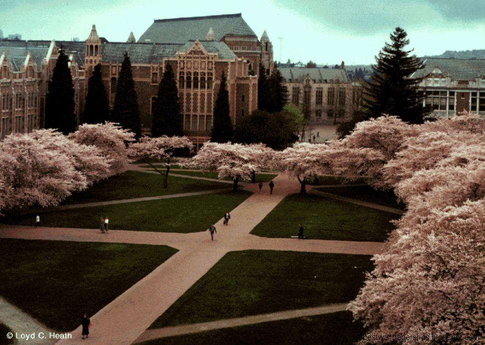 University Of Washington Background Best Wallpaper Hd