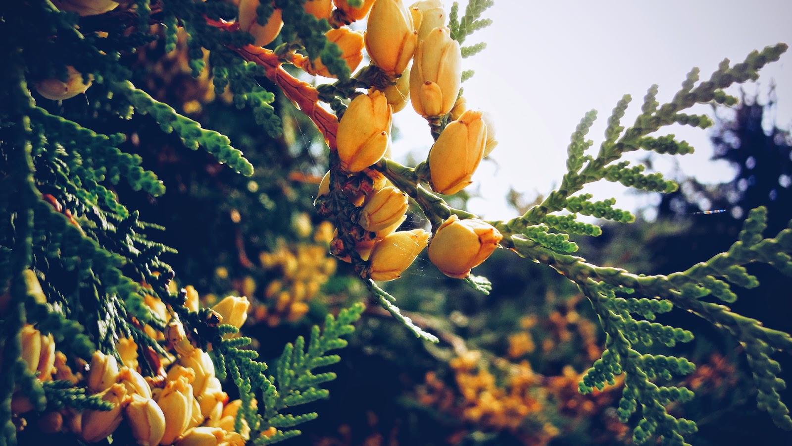 wiosna, zmiany, blog