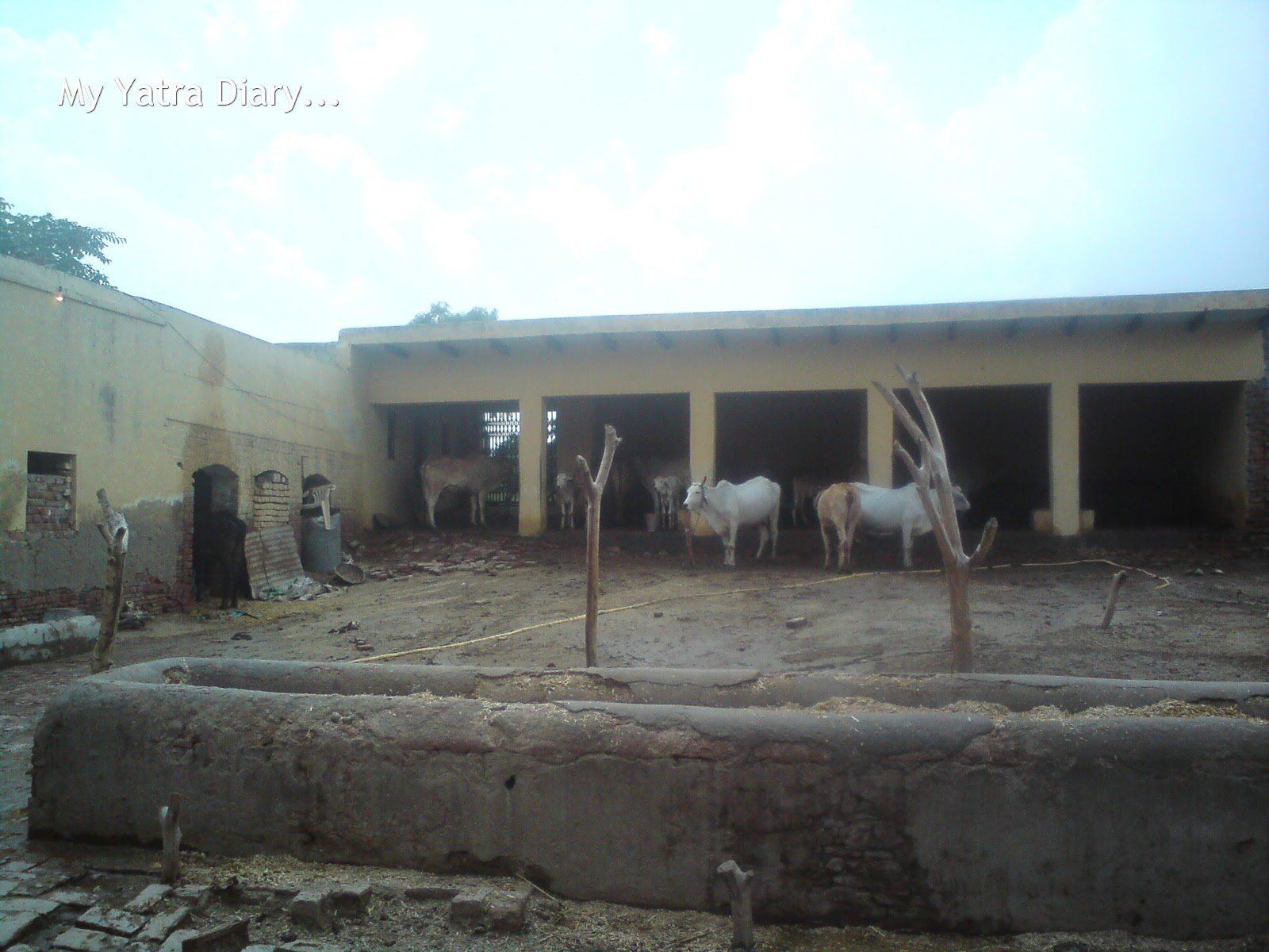 Cattle shed designs of india